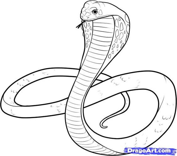 snake drawings for kids king cobra coloring pages