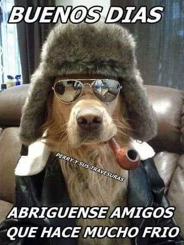 Pin By Maria On Buenos Dias Funny Dogs Animal Memes Funny Animals