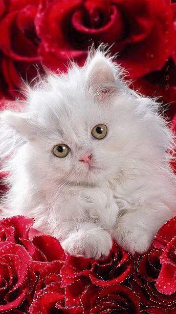 """Résultat de recherche d'images pour """"adorables chats animés"""""""