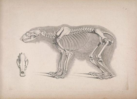 [Die vergleichende Osteologie /. Bonn :In Commission bei Eduard Weber,1821-1838.. biodiversitylibrary.org/page/40170386