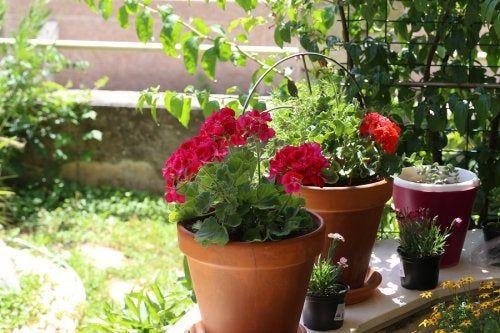 Flores De Verano 6 Opciones Para Tu Jardín Mejor Con Salud Flores De Verano Limpiadores Naturales Tipos De Flores