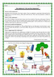 english worksheet rainforests reading vocabulary first grade pinterest english. Black Bedroom Furniture Sets. Home Design Ideas