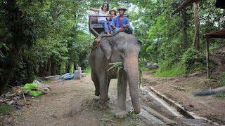 """O Grito do Bicho"": Elefante mata turista britânico na Tailândia"