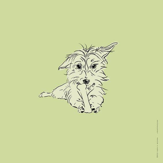 Line Drawing Of Yorkshire Terrier : Yorkie texts and pets on pinterest