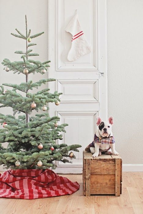 christmas pup sitting pretty | image via Dreamy Whites