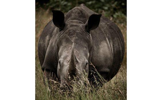 Foto da expoxição A Jornada do Rinoceronte