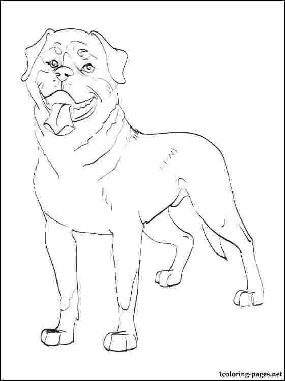 Best Printable Rottweiler Puppies Coloring Pages 777
