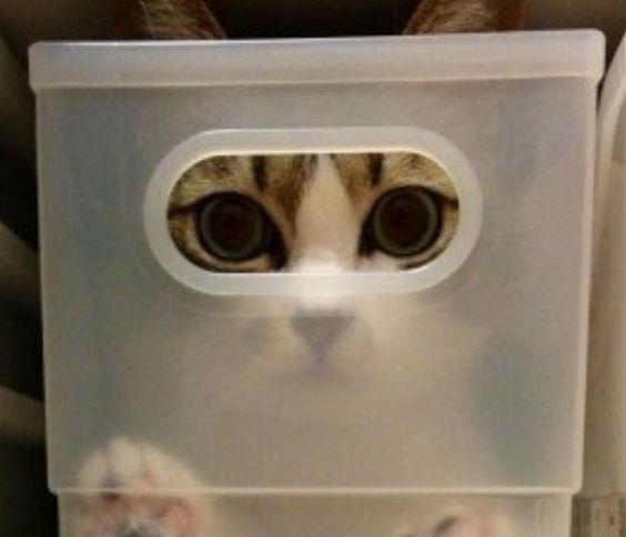 """Gatos e sua brilhante vocação para se enfiar em espaços apertados, pequenos e inesperados. Gatos e sua grande façanha de surpreender. Neste ensaio, uma série de fotos retrata o instinto dos felinos de sempre se esconder em cantos ou lugares que você jamais imaginaria. Dizem que o hábito é sinal de segurança ou proteção, mas...<br /><a class=""""more-link"""" href=""""https://catracalivre.com.br/geral/invencoes-ideias/indicacao/para-um-gato-nenhum-buraco-e-impossivel-confira-as-fotos/"""">Continue lendo…"""