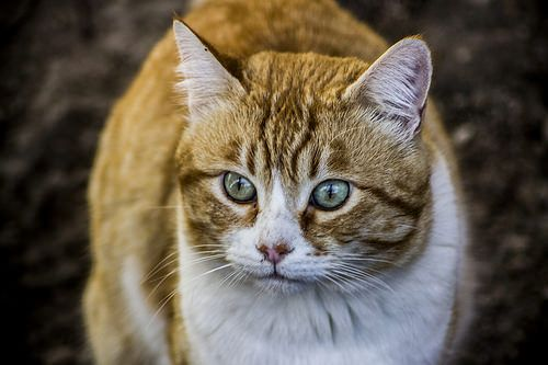 Don Gato (Top Cat) - http://bit.ly/29iwIKh The Cat Log