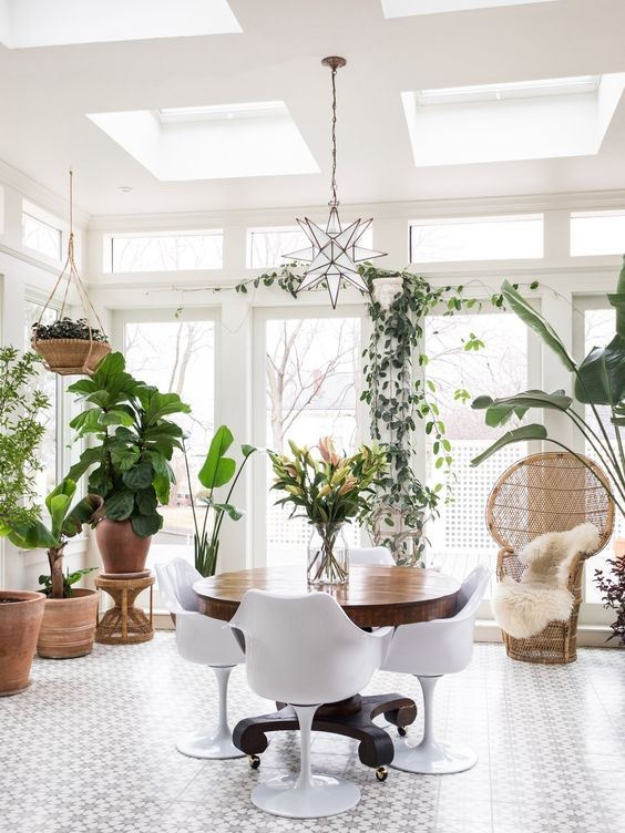 Plants in conservatory