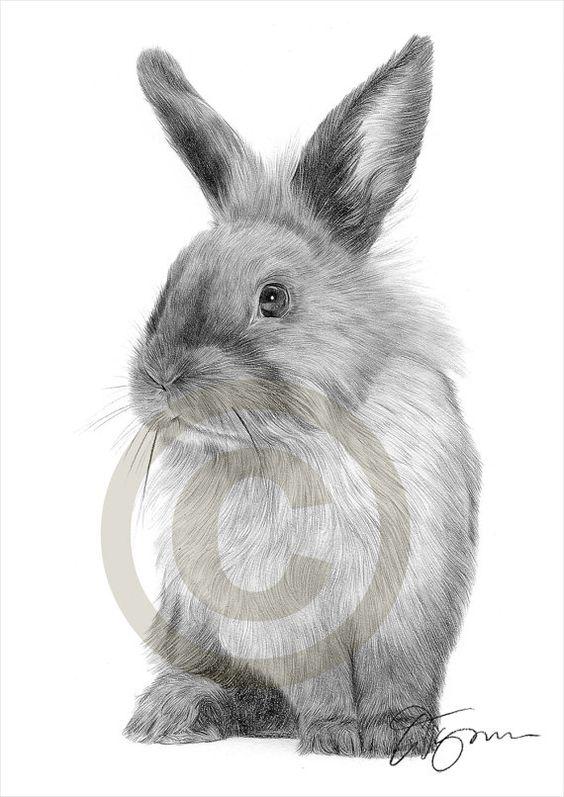 Hase Kaninchen Bleistiftzeichnung Druck Tier Kunst Kunstwerk