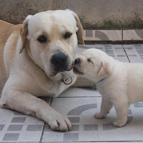 Sometimes all you need is a kiss...