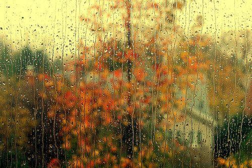 Looking through the rain!