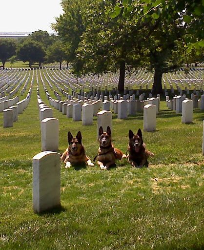 United States War Dogs | ... National Cemetery. These Military Working Dogs had just been retired