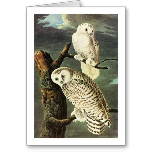 james audubon paintings on fb | Snowy Owl, John James Audubon Card | Zazzle.co.uk