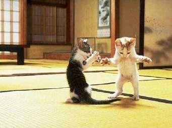 dancing kitties!! lol