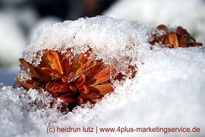 Frohe Weihnachten und ein Tipp für nadelnde Weihnachtsbäume (DIY).