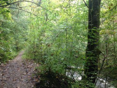 """walk path en los #Bosques de Gales. Descubre #Gales en nuestro artículo """"Gales, mas que un título nobiliario"""" . #ReinoUnido #UK #Wales"""