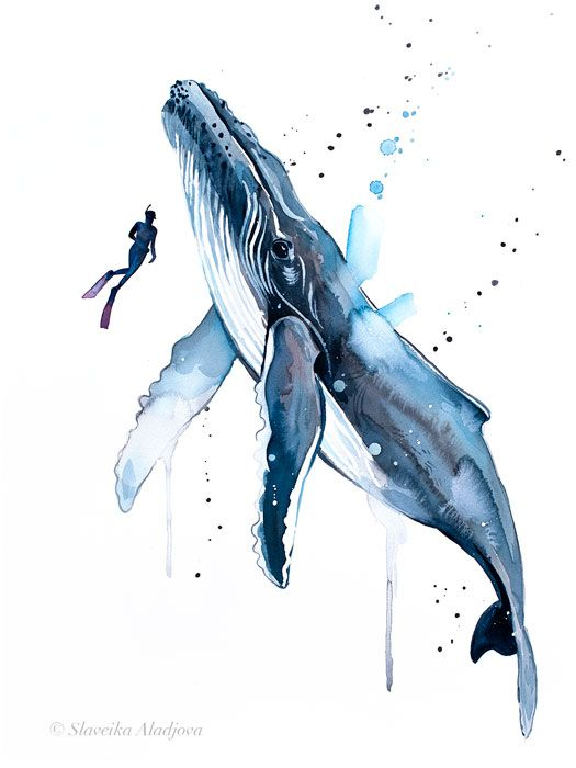 Freediver With Humpback Whale Watercolor Painting Print By