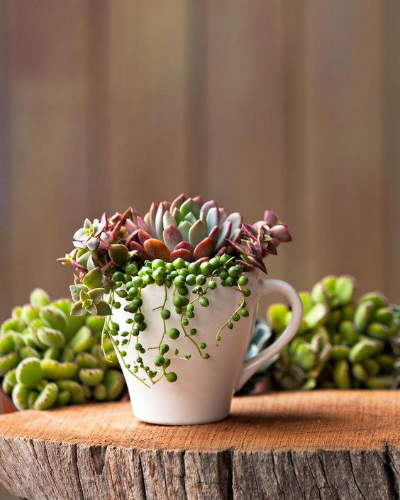 For a one-of-a-kind gift that's as pretty as a bouquet, pot succulents in a sweet little tea cup. Use a white cup for a modern look or an ornate one for a vintage feel. #succulentcontainer #gardening #gardenideas #bhg