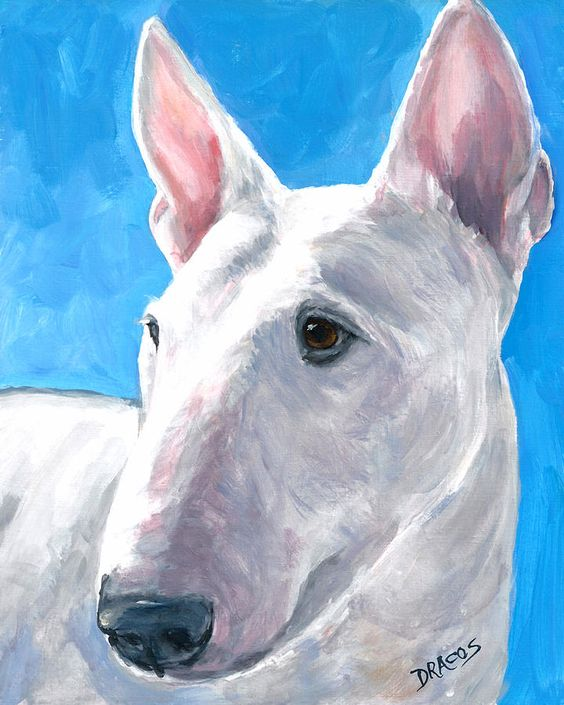 English Bull Terrier On Blue Painting  - English Bull Terrier On Blue Fine Art Print       Beauriful Expression