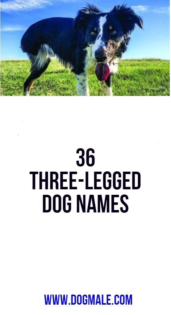 36 Three Legged Dog Names Dog Names Dogs Best Dog Names
