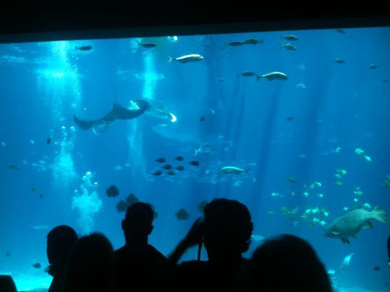 Everybody has to visit the Aquarium in Atlanta. Cool place. And see the dolphin show!