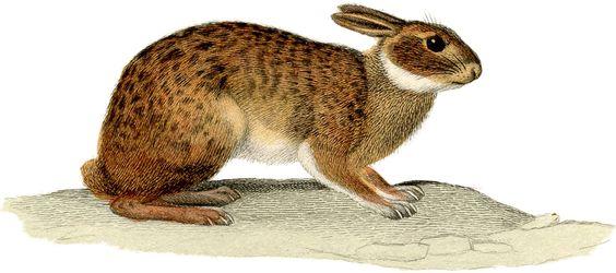 Natural Rabbit Image