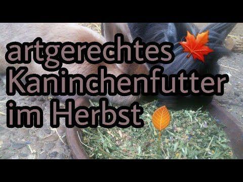 Kaninchenernahrung Im Herbst Youtube Mit Bildern Kaninchen Ernahrung