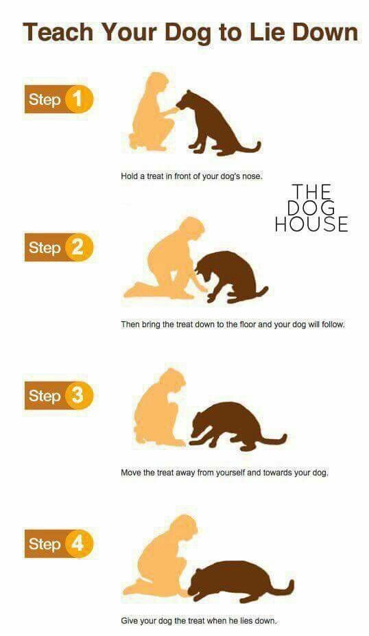 how to teach my dog to lay down