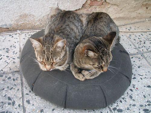 Kočky na starém Zafu na balkóně