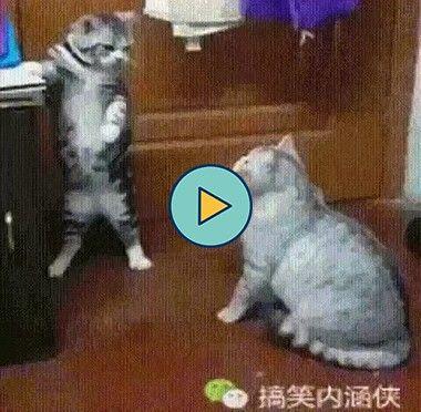 Dois gatinho que não se entendem