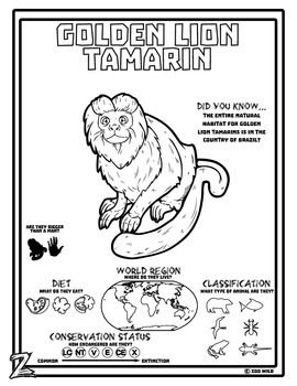 a golden lion tamarin coloring page great