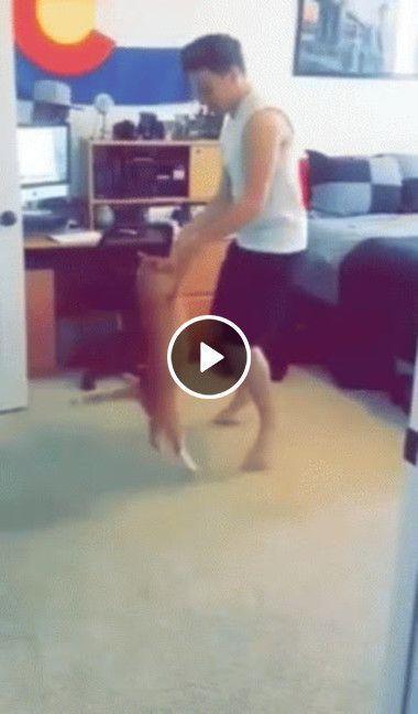 Gato dançando musica caipira com seu dono
