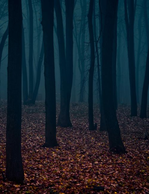 Eerie forests can be so inviting.  The shroud of mist coating the air with a flat graphic back drop of withering dark trees.