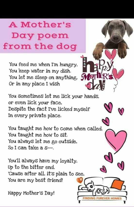 Mother S Day Poem From The Dog Dogmom Mothers Day Poems Dog Poems Dog Quotes