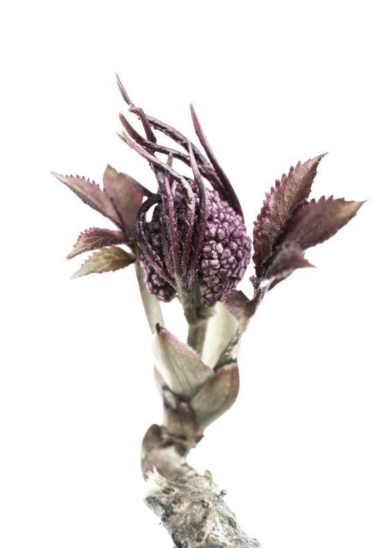 Alien flower - C-print:
