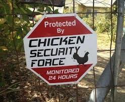 peck..peck..peck