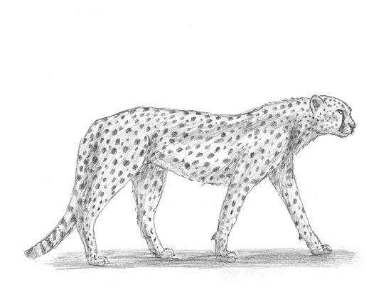 Pin On Animal Drawing Realostic