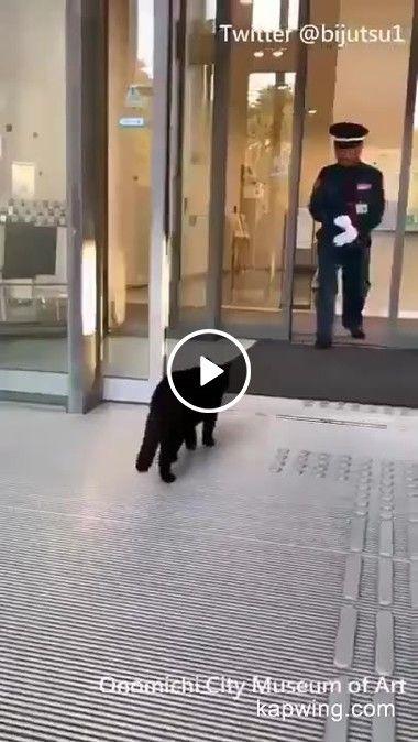 Deixem os gatinhos entrarem no hotel, eles só querem descansar