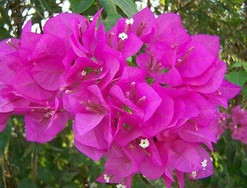 Contoh Gambar Bunga Gampang Tutorial Gambar 213000 Views Contoh Gambar Lukisan Bunga Sederhana Dan Simple Gambar Lukisan B Gambar Bunga Bunga Lukisan Bunga