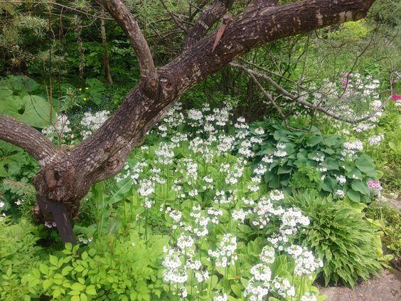 North Hill Garden, Readsboro, VT http://travelingnearandfar.com/2014/07/04/north-hill-garden/