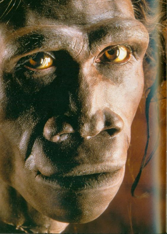 """Homo erectus (""""upright man"""") is an extinct species of hominid that lived about 1.3 to 1.8 million years ago. The species originated in Africa and spread as far as India, China and Java. It is debated that it may be identical to Homo ergaster, which is commonly accepted as the direct ancestor of modern humans.:"""