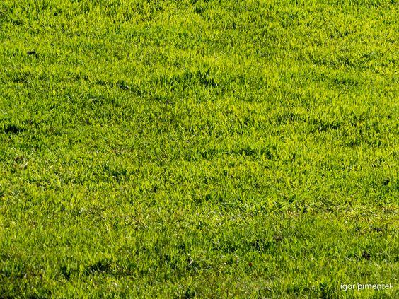 Pastos verdejantes