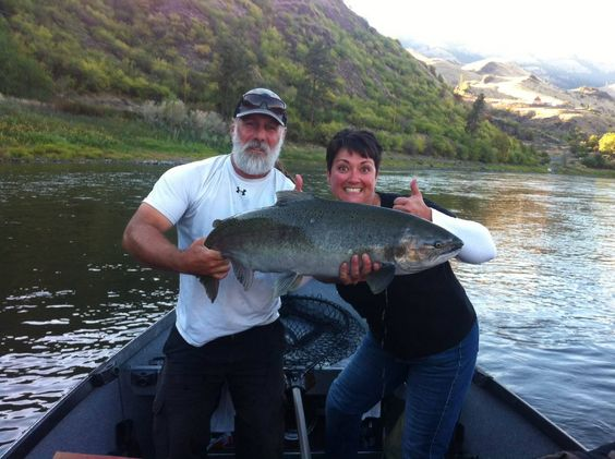 All the Hype about Fall Chinook is real! 20lber caught and released on light tackle while Steelhead fishing on the Salmon River. 10-19-14 — in Riggins, Idaho.