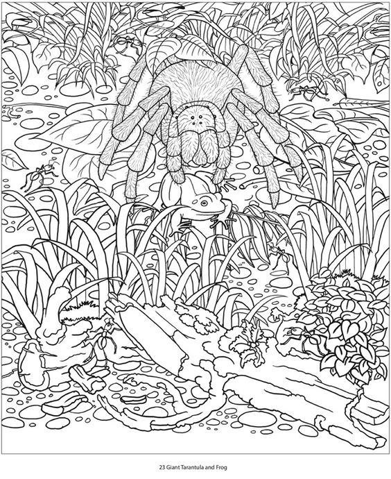 Hidden Animals Coloring Pages : Creative haven amazon animals a coloring book with