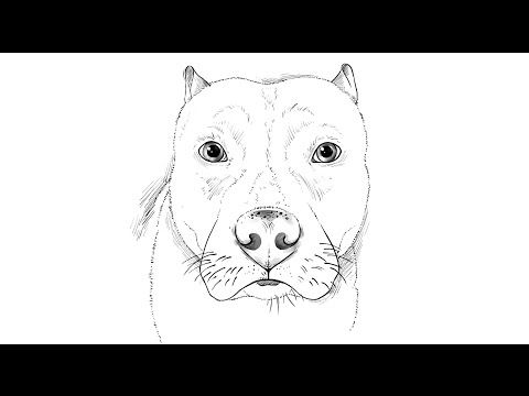How To Draw A Pitbull Dog Youtube Dog Face Drawing Cute Dog