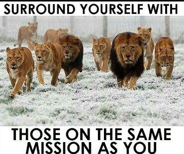 #mission #seek & #destroy: Get out the way! #lion #animal #pet #captions #memes: