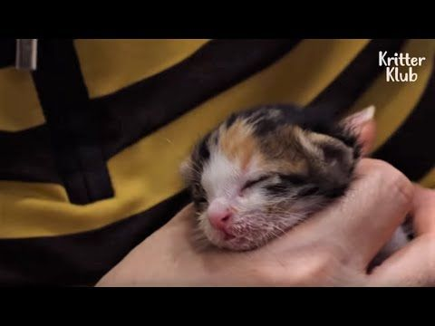 Cat Mom Rescued Along With Her Surviving Kitten She Wouldn T Let Her Go Gatitos Adorables Gatitos Lindos Gatitos Divertidos