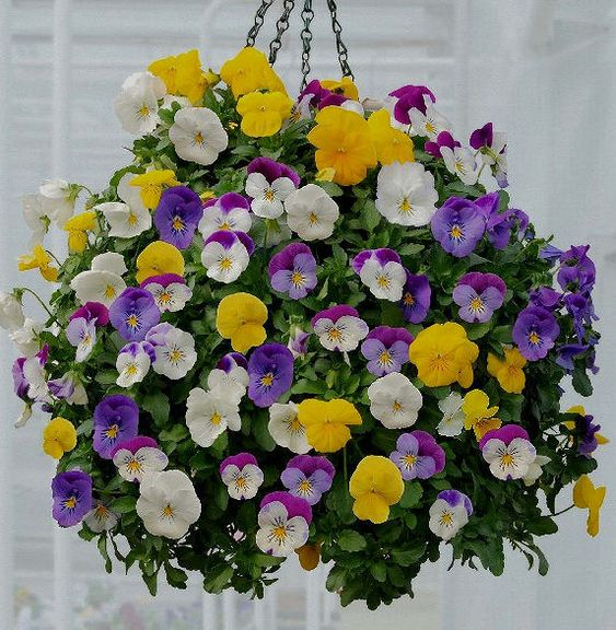 This hanging basket would be pretty for our front porch.